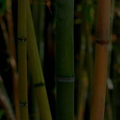 Le Clos 67 - La bambou